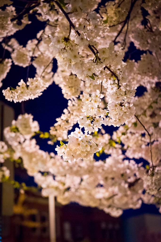 4-11DcBlossoms_0004
