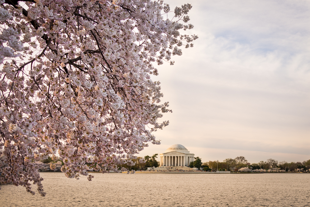 4-11DcBlossoms_0065