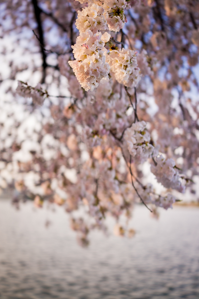 4-11DcBlossoms_0072
